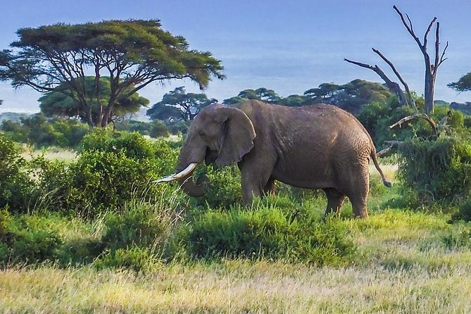 Full day tour to Amboseli National Park (Post Covid-19 offer)