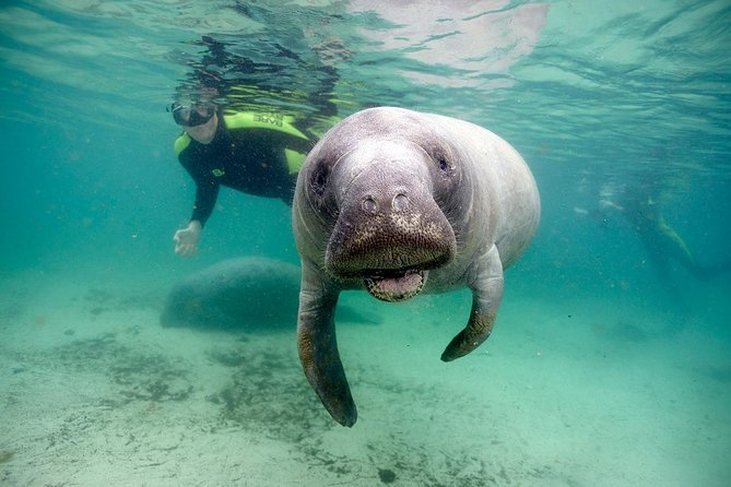 Private Swim with Manatee Adventure in Crystal River