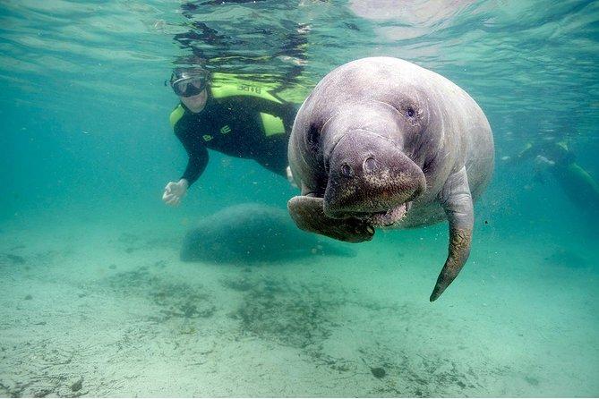 Small Group Swim with Manatee Adventure