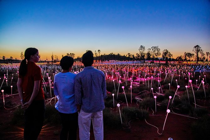 Uluru Field of Light Sunrise Tour image