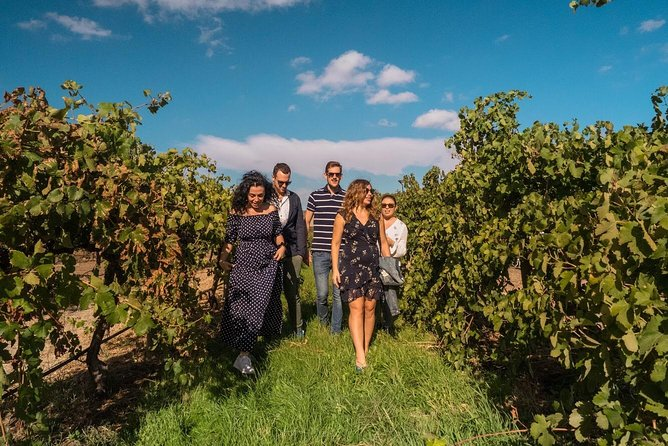 Barossa Valley Private Tour (from 2 to 11 people)
