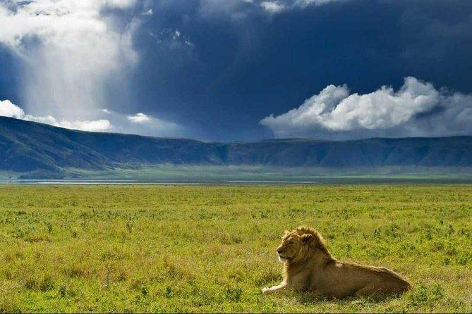 Ngorongoro Crater Tour day Trip