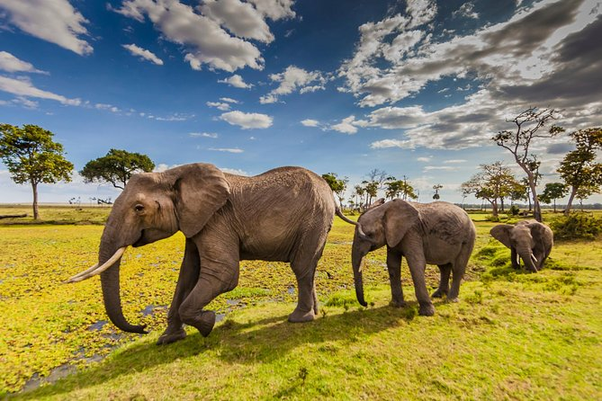 5-Days Best Wildlife Safari: Amboseli & Tsavo West National Park Private Safari