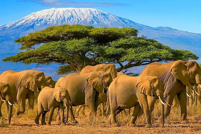 Amboseli National Park Guided Full Day Tour photo 13
