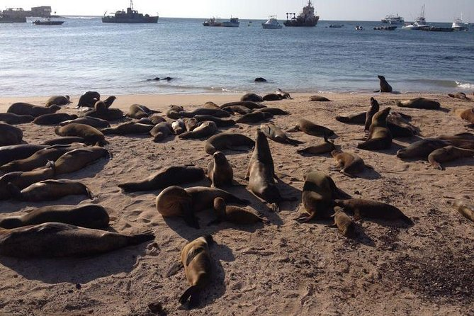 Galapagos Cruise Deals 5 and 8 Days photo 10