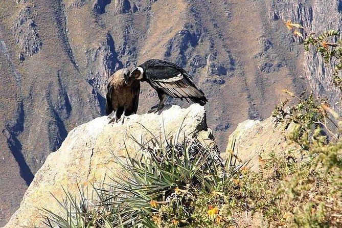Excursion to Colca Canyon 1 Day