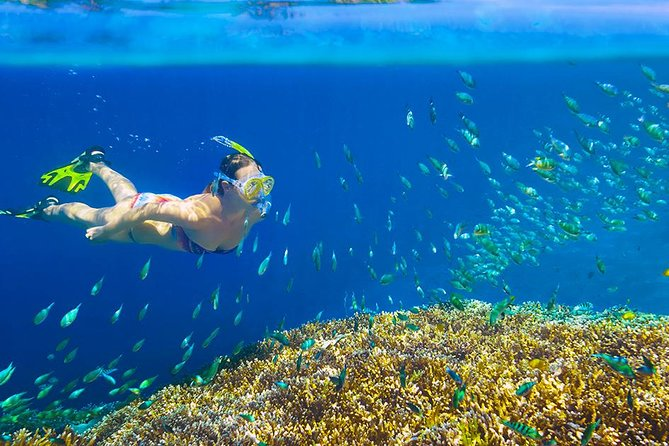 Private 3-Hour Snorkeling Tour in Glass Bottom Boat