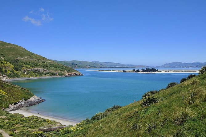 Dunedin and Otago Peninsula Wildlife Tour with Optional Larnach Castle Visit