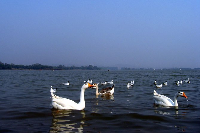Delhi & Chandigarh Full Day Tour Including Lunch photo 20