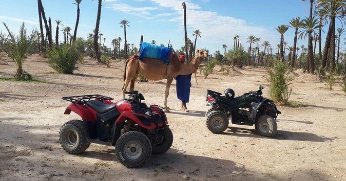 Quad bike and camel ride on palm grove