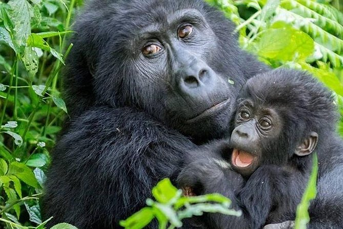 3 Day Gorilla Trekking Tour