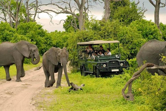 Chobe Full Day Trip photo 8