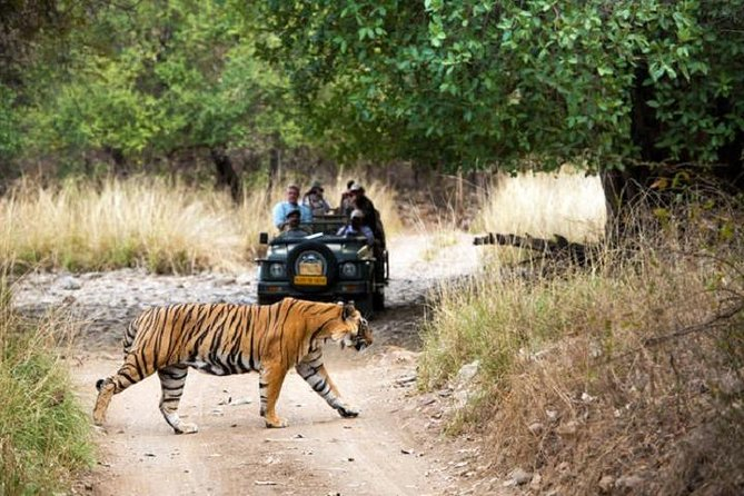 Golden Triangle Tour with Optional Ranthambore Wildlife Safari