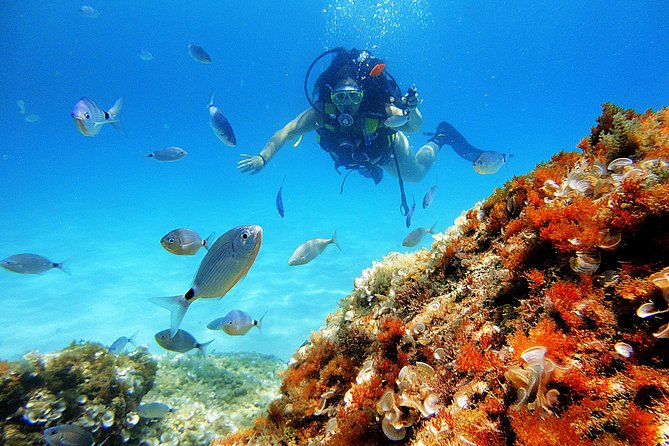 Mallorca: Try Scuba Diving in a Beautiful Nature Reserve photo 1