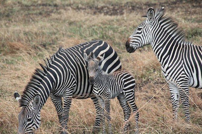 3 Days Adventurous Safari
