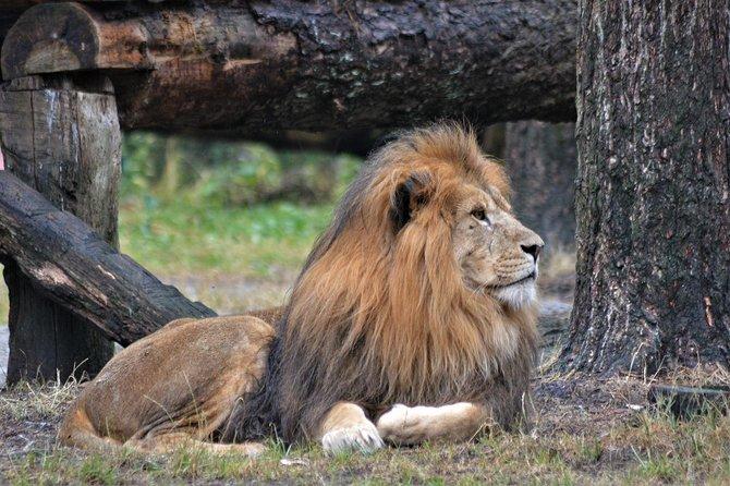 2 Days Joining Group to Tarangire & Ngorongoro Crater Lodge Safari Tour Tanzania