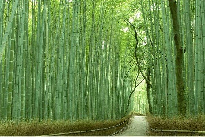 Bosco Di Bamb.Tour A Piedi Mattutino Di Arashiyama Bosco Di Bambu E Tenryuji Jojakkoji Togetsukyo