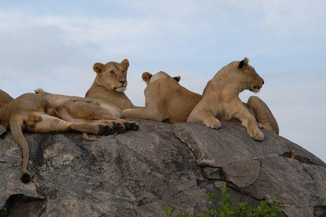 3 Days Tarangire, Manyara & Ngorongoro Budget Lodge Safari Tour Tanzania