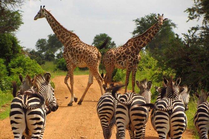 10 Days Serengeti Wildlife Safari and Tanzania Cultural Tour