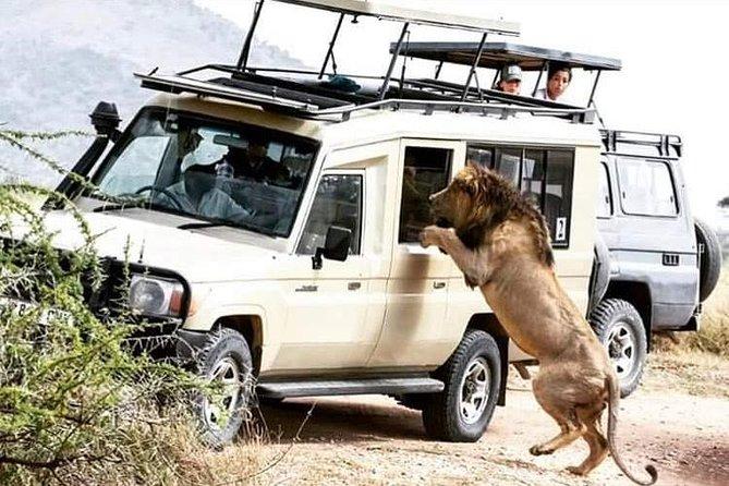 4 Days Tarangire,Serengeti & Ngorongoro Crater Budget Lodge Safari Tour Tanzania