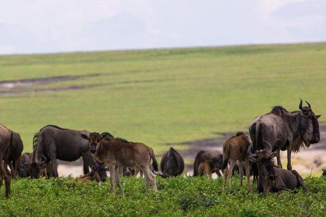 5 Days Tarangire,Serengeti,Ngorongoro&Manyara Joining Group Safari Tour Tanzania