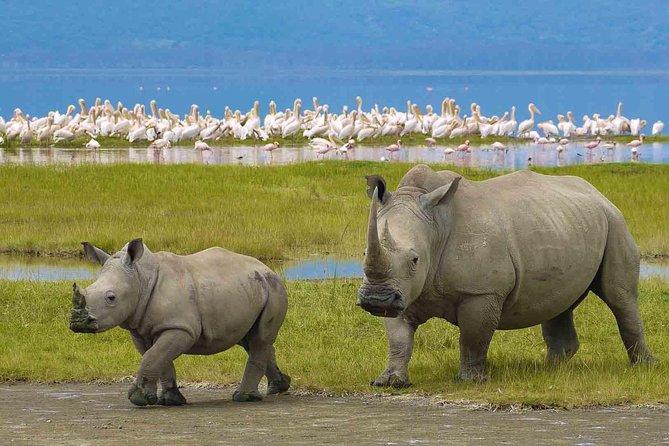 12 Days Tanzania's Northern circuit and Southern safari Tour