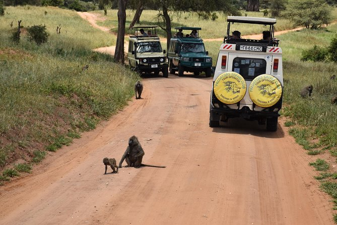 10 Days Perfectly Family Luxury Safari Tour Tanzania photo 1