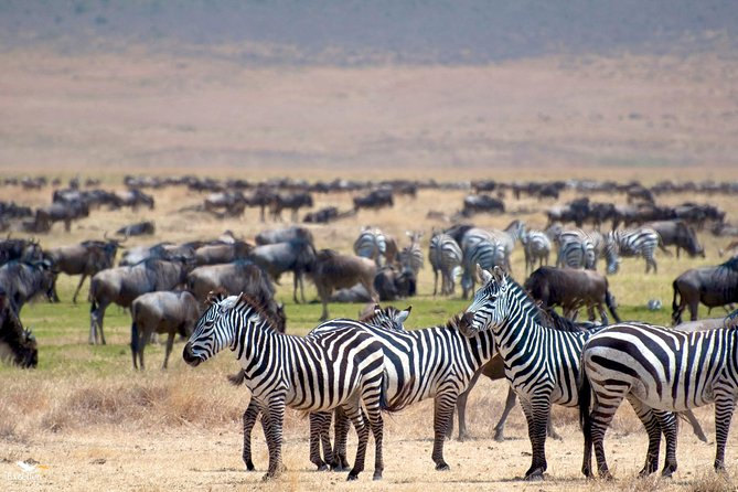 6 Days Tarangire, Serengeti, Ngorongoro & Manyara Joining Group Safari Tour
