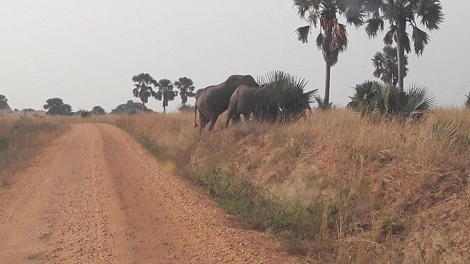 3 Days Tour To Murchison Falls National Park In Uganda