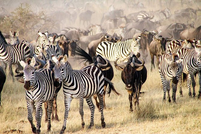 5 Days Budget and Camping safari Lake Manyara , Serengeti &Ngorongoro crater