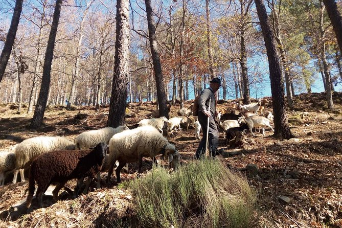 Follow the Shepherd Tour