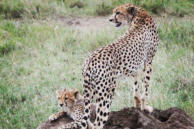 serengeti,ngorongoro,tarangire & lake manyara 5days group & camping tour