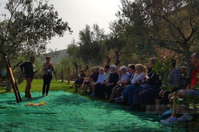 Olive Oil Tour in Monemvasia
