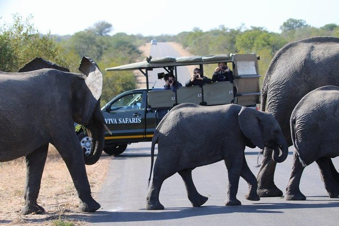 4 Day Classic Kruger National Park Safari