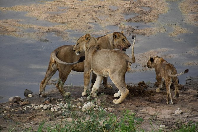 5 Days Tanzania Budget Safari photo 6