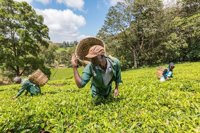Kiambethu Tea Farm Tour & Lunch From Nairobi