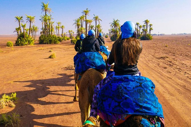 Balade en chameau et quad au palmeraie