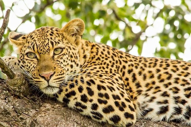 Full day Safari Kruger National Park photo 4
