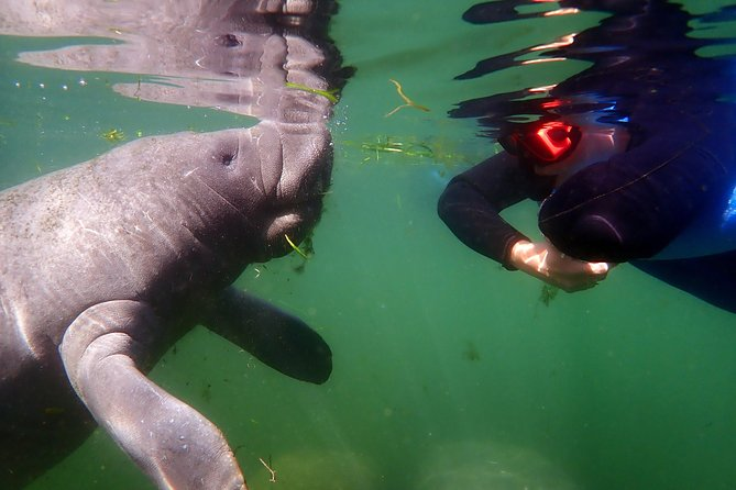Crystal River Manatee Swim in Kings Bay National Wildlife Refuge