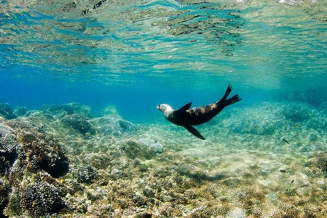 Cabo Pulmo National Park Snorkel Expedition