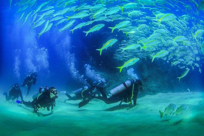 Beginner Scuba diving experience