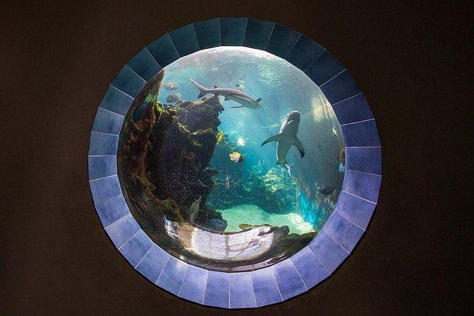 Nouméa's Aquarium Trip - Unlimited access to the Aquarium all and Hop-On Hop-Off ticket all day long.