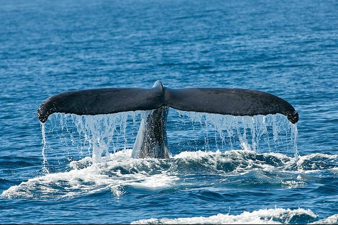 San Diego Whale Watching Tour photo 6