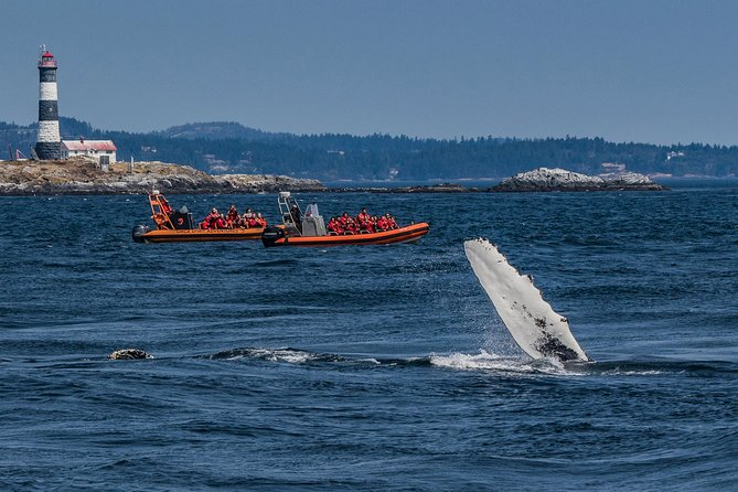 Whale Watching Tour in a Zodiac Boat in Victoria