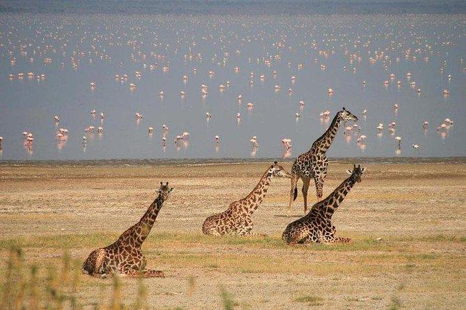 Lake Manyara Guided Tour From Arusha