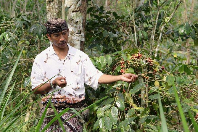 Bali Coffee Vistas and Culture