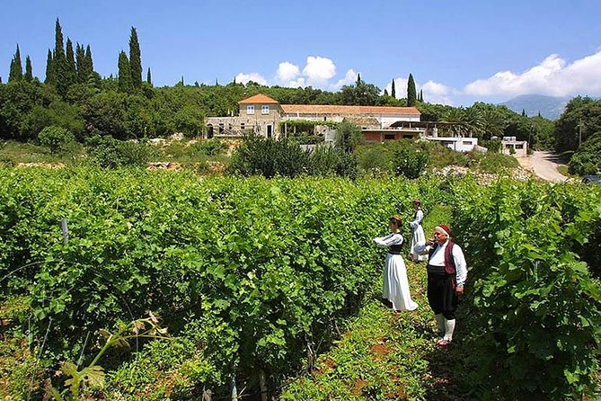 Konavle - Private Excursion from Dubrovnik with Mercedes Vehicle