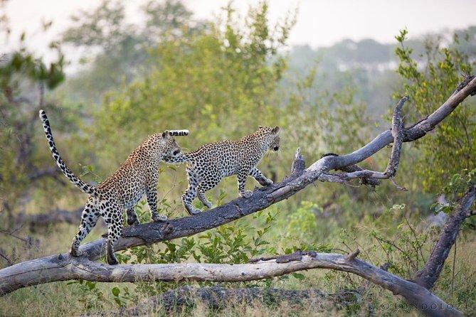 Jhalana Leopard Safari - Encounter with the Shy Cats