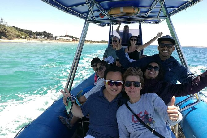 Dolphin and Seal Watching Eco Boat Cruise Mornington Peninsula photo 4