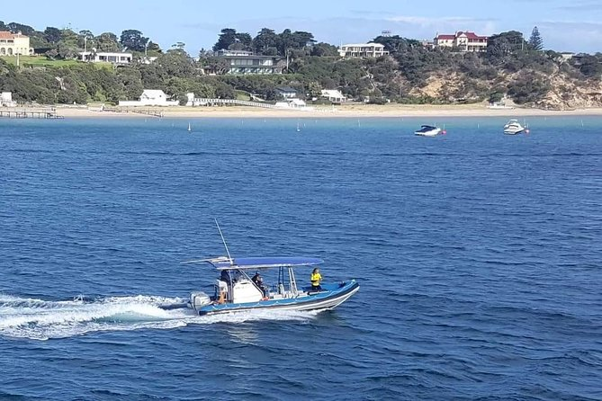 Dolphin and Seal Watching Eco Boat Cruise Mornington Peninsula photo 16